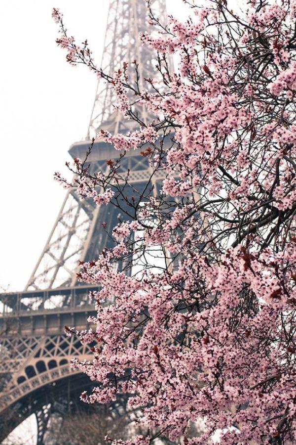 flores-paris